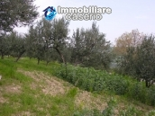 Plot of land with olive grove in Gissi, Abruzzo 5