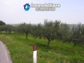 Plot of land with olive grove in Gissi, Abruzzo 6