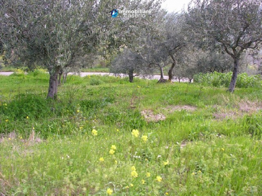 Plot of land with olive grove in Gissi, Abruzzo