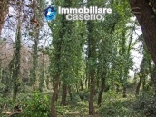 Land of 5000sqm for sale in Petacciato, Molise region 4