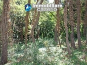 Land of 5000sqm for sale in Petacciato, Molise region 6
