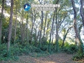 Land of 5000sqm for sale in Petacciato, Molise region 8