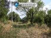Country house with 30 hectares of land in Tufillo 9