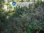 Land of 4000sqm with ruin to rebuild entirely in Palmoli 4