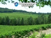 Property situated in France with wineyard 10