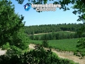 Property situated in France with wineyard 9