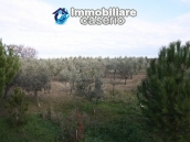 Newly built country house with land in Montenero 17