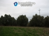 Realise your country house with two hectares of olive groves 10