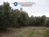 Realise your country house with two hectares of olive groves 11