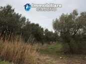 Realise your country house with two hectares of olive groves 5