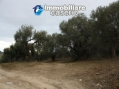Realise your country house with two hectares of olive groves 7