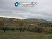 Realise your country house with two hectares of olive groves 8