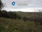 Realise your country house with two hectares of olive groves 9