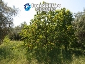 Agricultural land of 5000sqm with water spring in Vasto 4