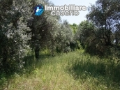 Agricultural land of 5000sqm with water spring in Vasto 5